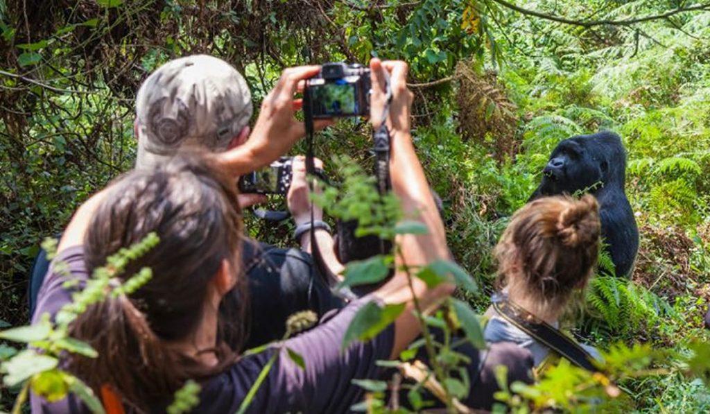 Habituated Gorilla safaris inside Buhoma