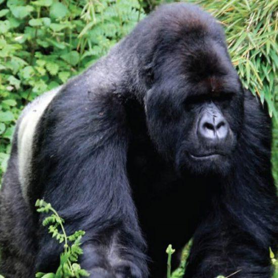 Gorilla tracking Bwindi, Lake Bunyonyi
