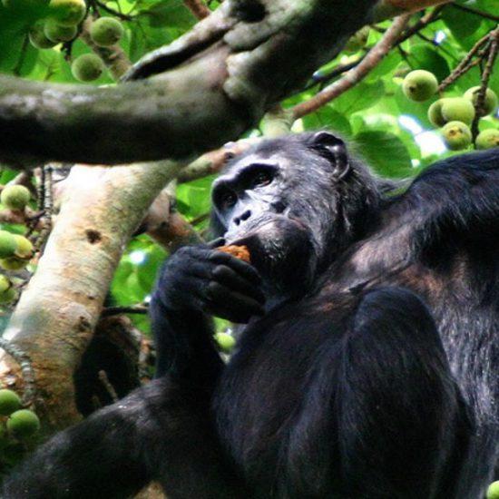 Gorilla trekking in Uganda, Lake Bunyonyi Experience