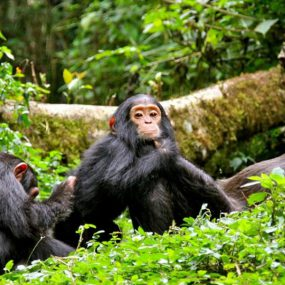 Gorilla Tour and Wildlife Safari