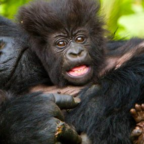 Bwindi Gorilla Flying Tour