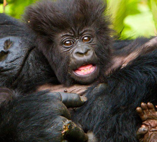 Bwindi Gorilla Flying Tour