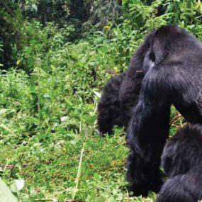 Gorilla Trek Uganda, Lake Bunyonyi safari