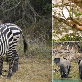 Uganda adventure safari
