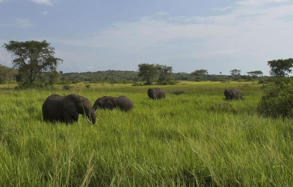 How to Access Bwindi, gorilla trekking in bwindi , Bwindi from Queen Elizabeth