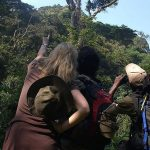 Bird watching species in Bwindi Impenetrable Forest National Park Uganda