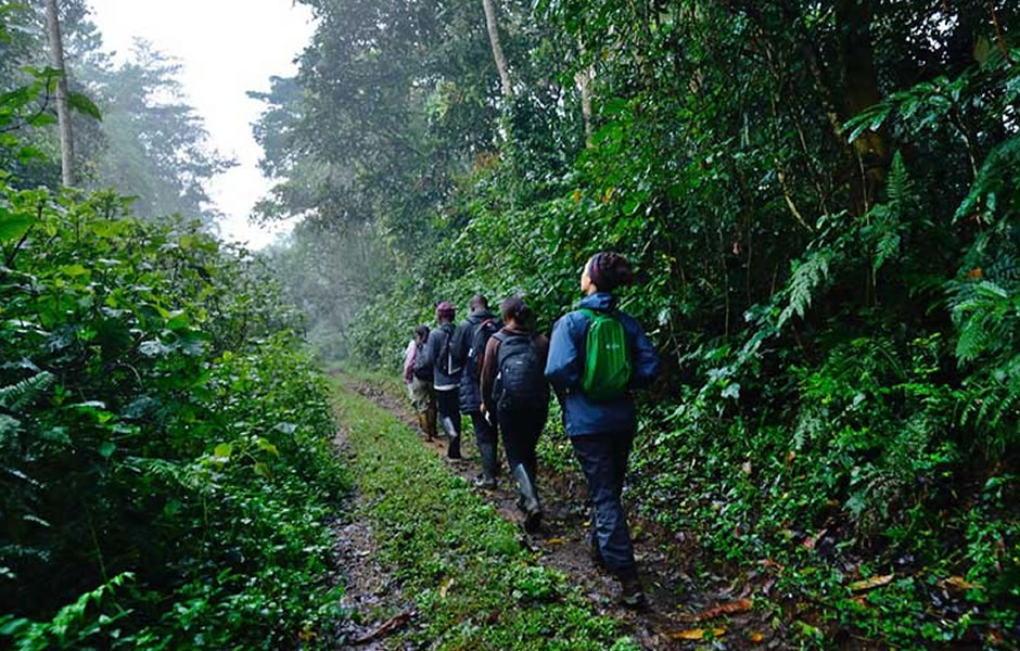 forest walk in Bwindi National Park