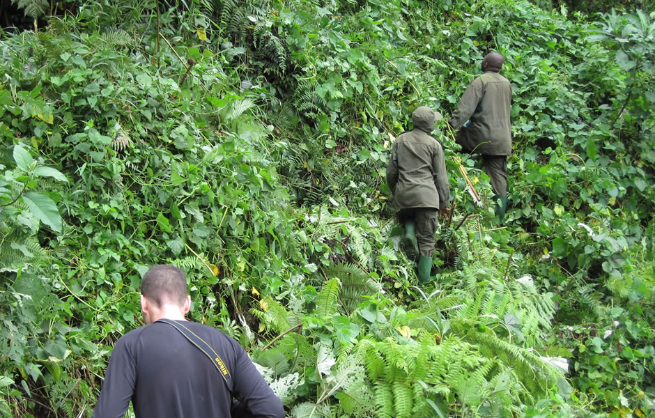 eco tourism promote Gorilla Tourism in Bwindi