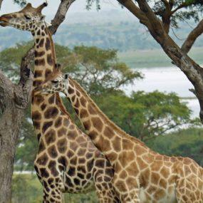 Murchison Falls Safari Uganda