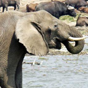 safari to queen Elizabeth Uganda