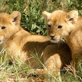 Adventure safari Uganda