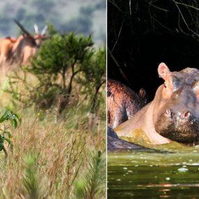 tour to Lake Mburo, tour national park
