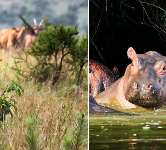 tour to Lake Mburo, tour national park