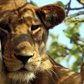 Safari in Queen Elizabeth