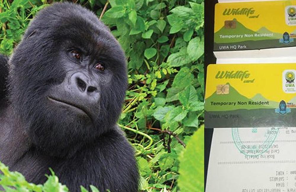 How much is a gorilla trekking permit