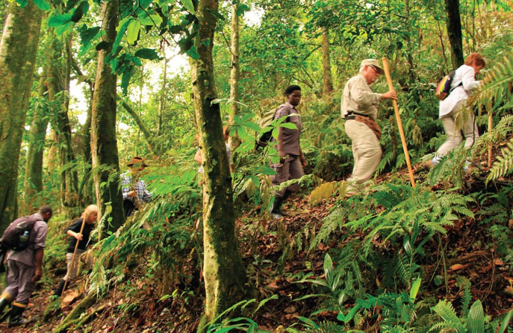 How to get to Bwindi Forest National park