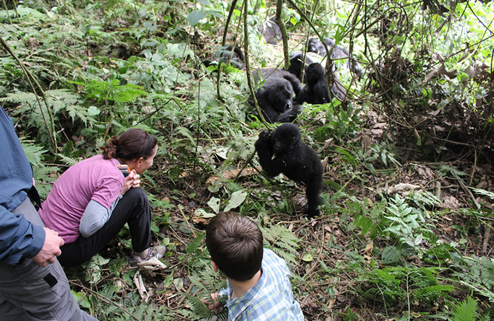 What is the best gorilla trekking sector in Bwindi, Bwindi Impenetrable forest National Park Uganda,Where to find gorillas in Uganda?
