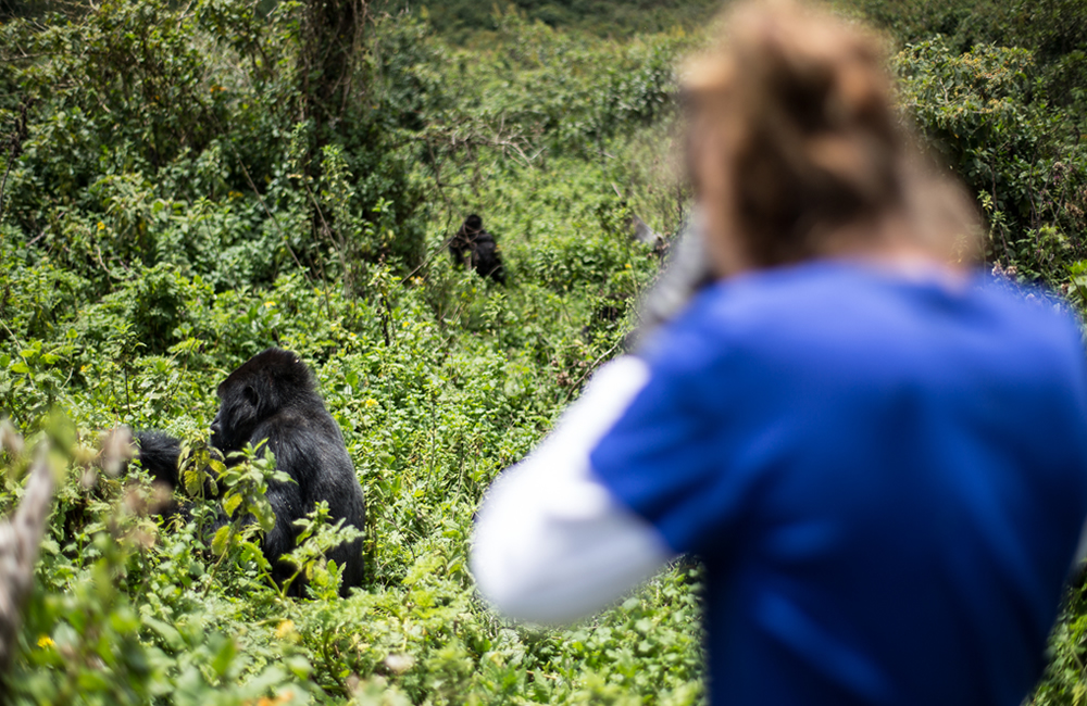 What is the best time to see gorillas, best time for gorilla trekking