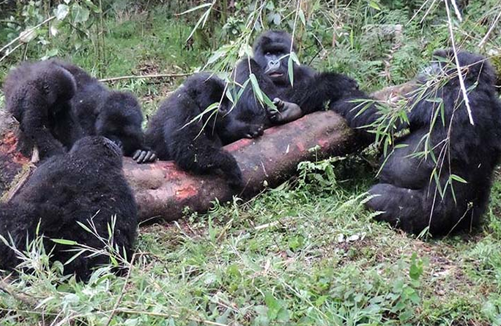 Where to stay on a Uganda Gorilla Tour?